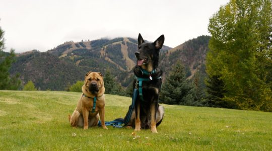 Ty and Buster in Ketchum, ID