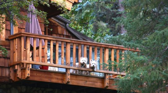 Local Dogs in Ketchum, ID