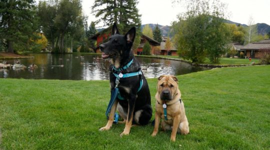 Buster and Ty in Sun Valley, Idaho