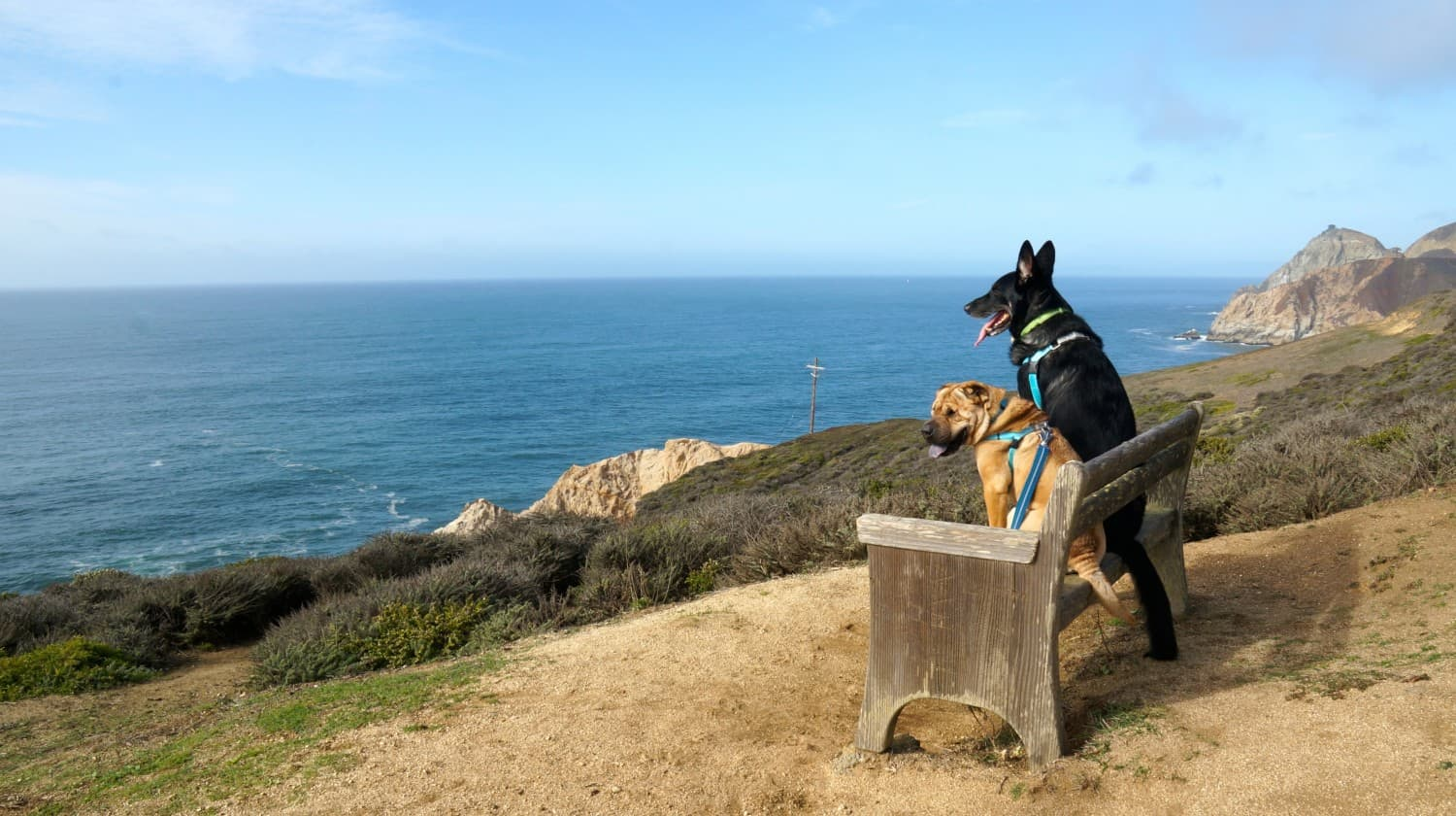 Ty and Buster at Grey Whale Cove Trail - Pacifica, CA
