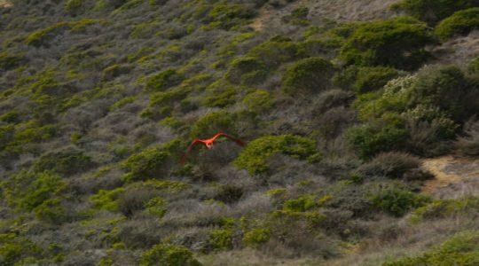 Grey Whale Cove Trail - Pacifica, CA