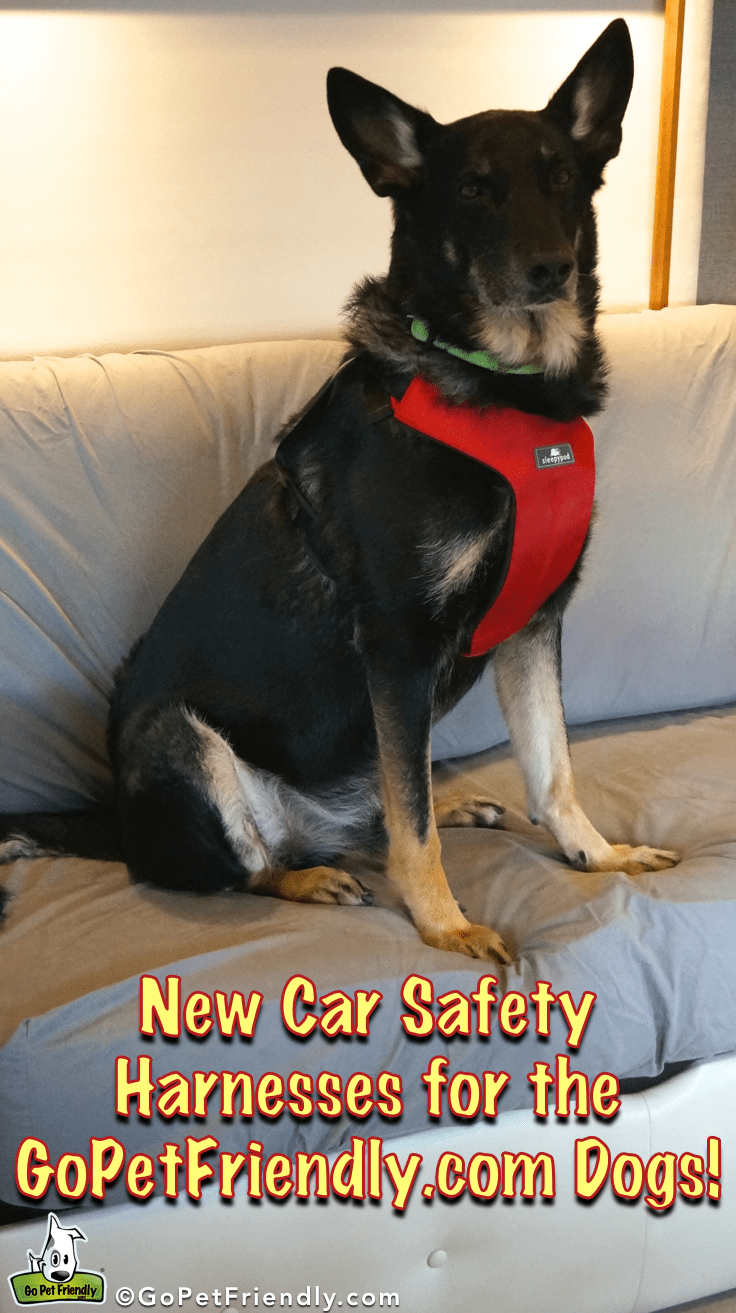 New Car Harnesses for the GoPetFriendly.com Dogs