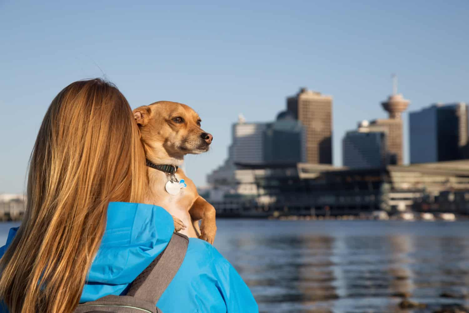 Woman holding her little dog, Chihuahua, and enjoying the beautiful view of downtown Vancouver, BC