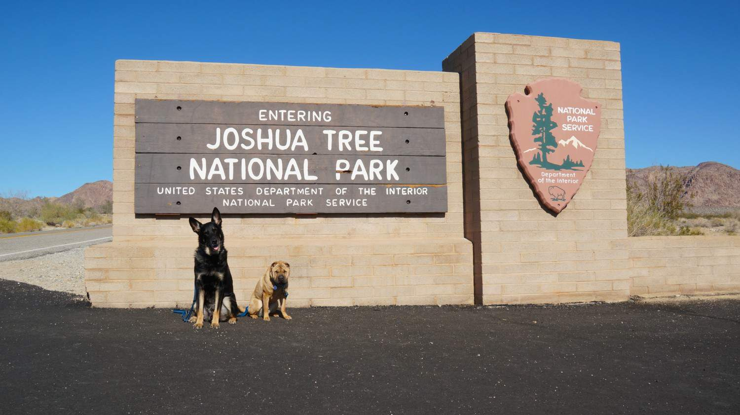 Buster and Ty at Joshua Tree National Park - Palm Springs, CA