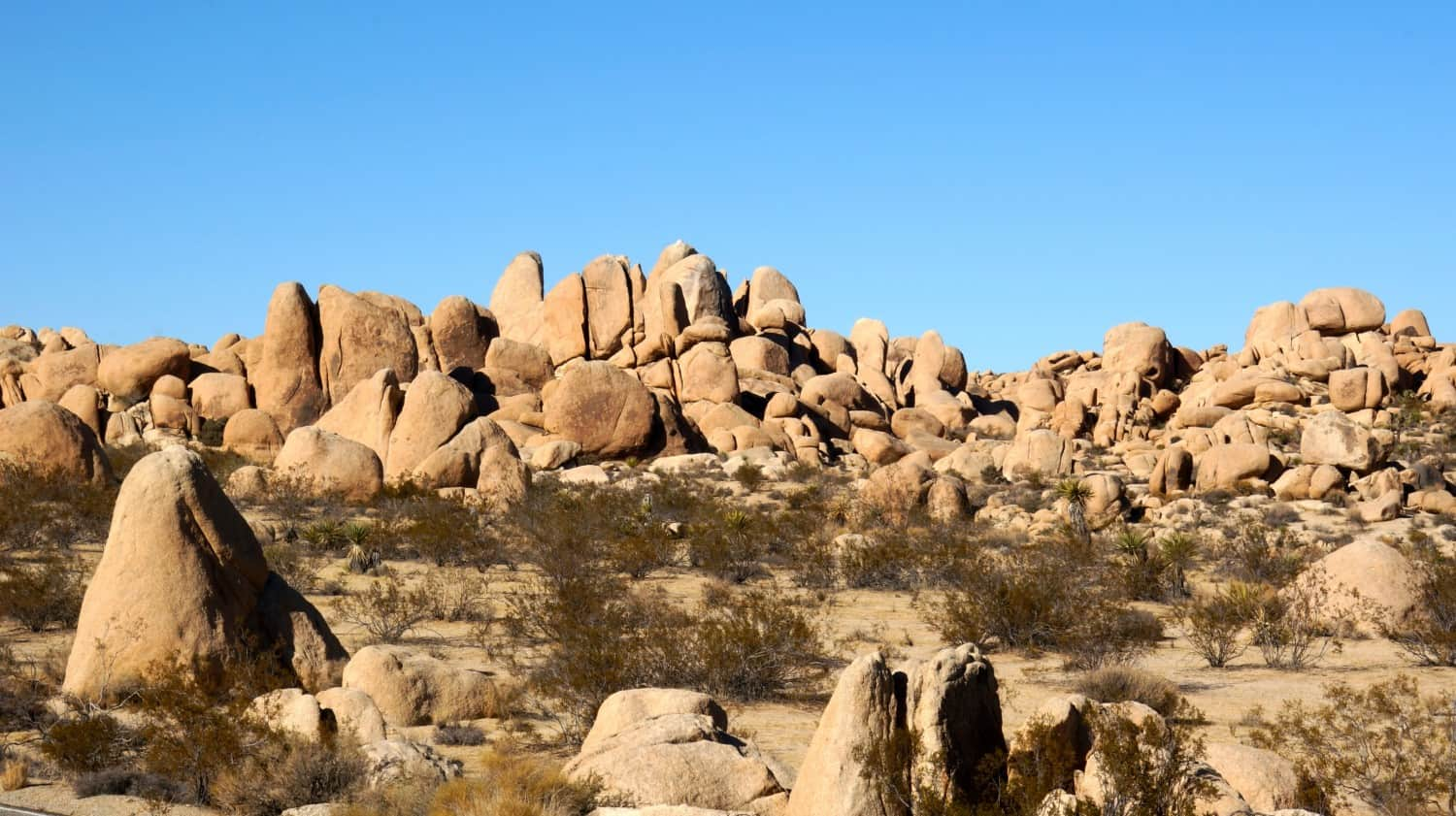 Joshua Tree National Park - Palm Springs, CA