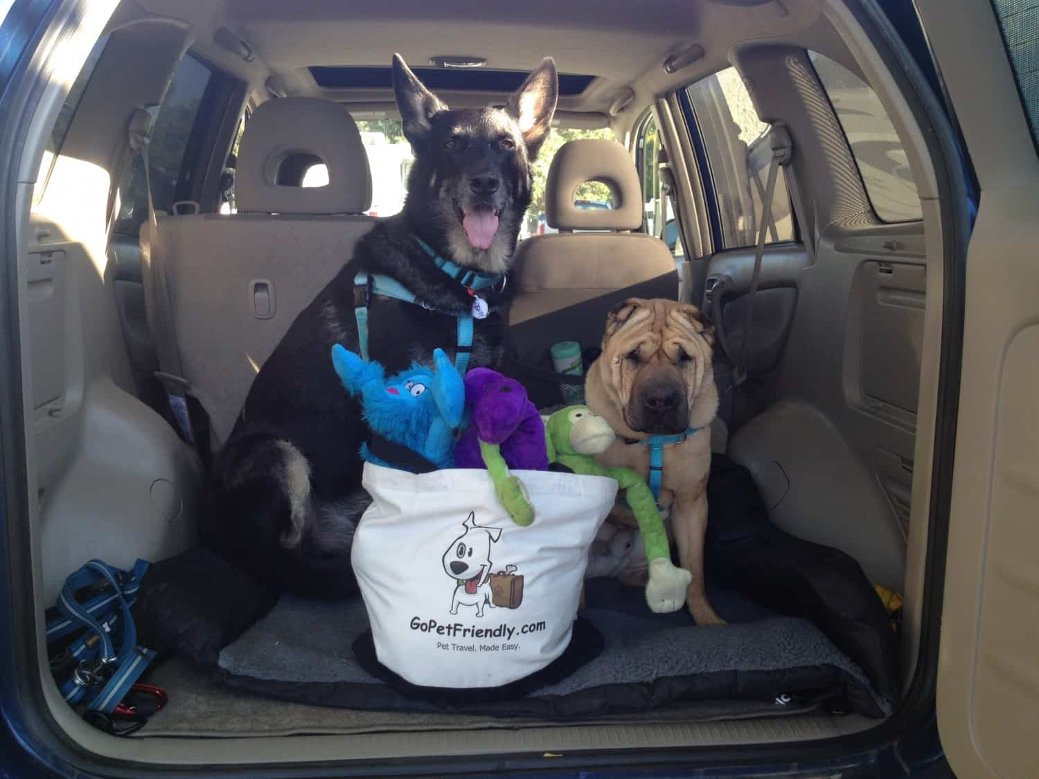 Buster and Ty - GoPetFriendly.com - Dogs packing for a trip
