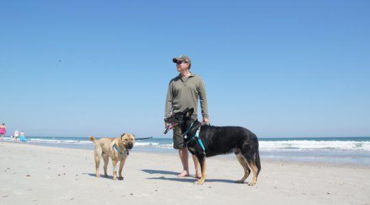 Dogs on the Beach - Myrtle Beach, NC