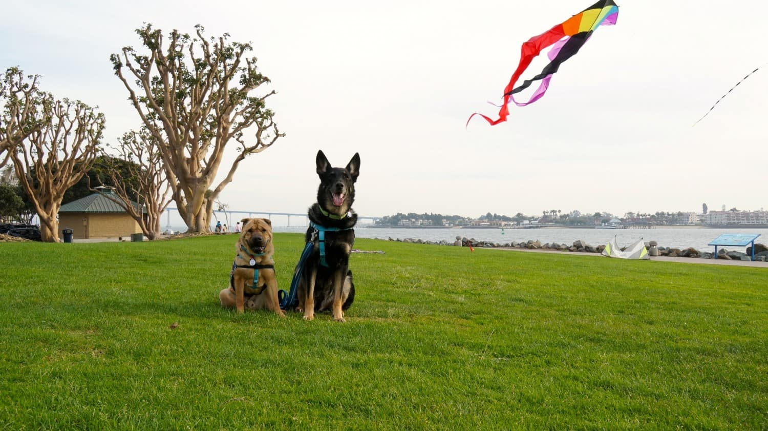 Dogs - Ty and Buster at Seaport Village - San Diego, CA