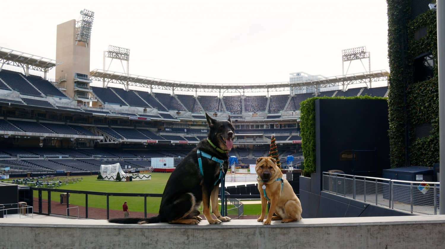 Dogs - Buster and Ty - Petco Park - San Diego, CA