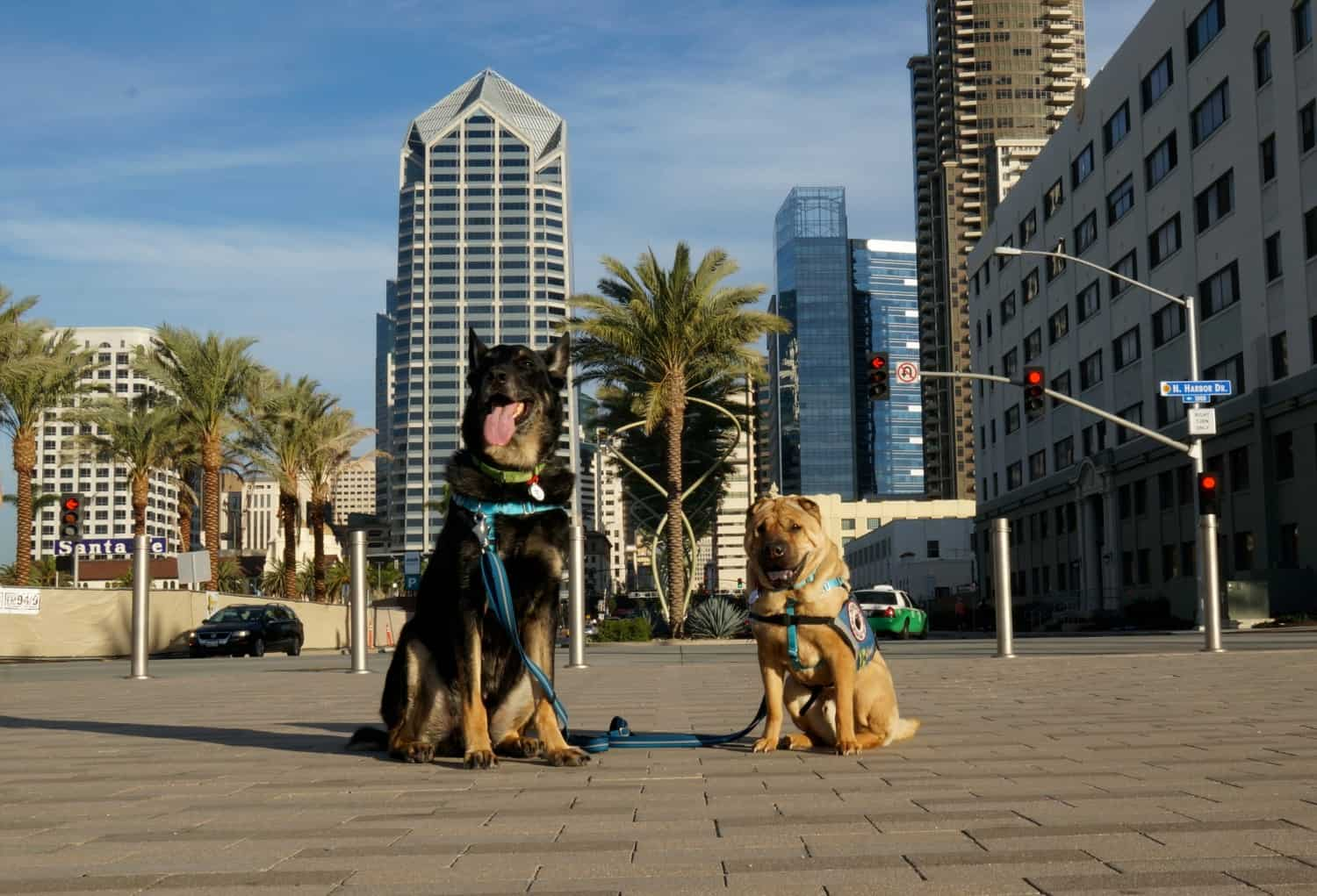 Seeing San Diego With Less Social Dogs