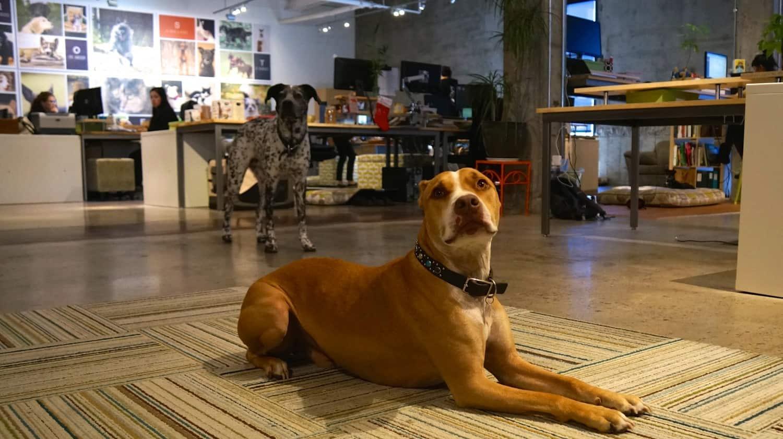 The Honest Kitchen Offices - San Diego, CA