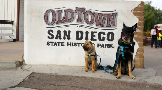Dogs - Ty and Buster at Old Town San Diego - San Diego, CA