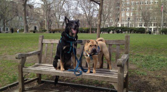 Dogs in Washington Square Park - Philadelphia, PA