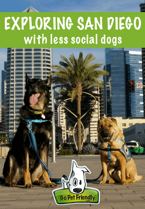 Exploring San Diego With Less Social Dogs