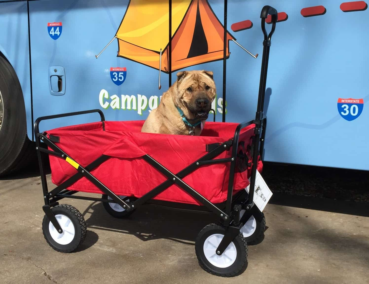 Dog in collapsable wagon