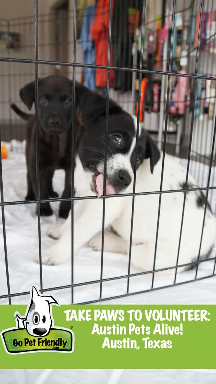 Take Paws to Volunteer: Austin Pet's Alive! - Austin, TX