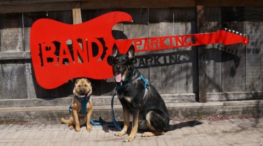 Ty and Buster - Band Parking at OGSG - Gruene, TX