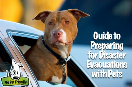 Guide to Preparing for Emergency Evacuation with Pets