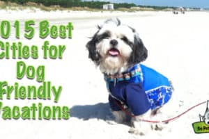 2015's Top 8 Cities for Pet Travelers from GoPetFriendly.com