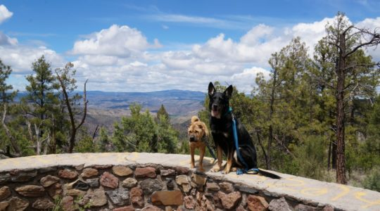 Seeing the Dog Friendly Sites in Sliver City, New Mexico.