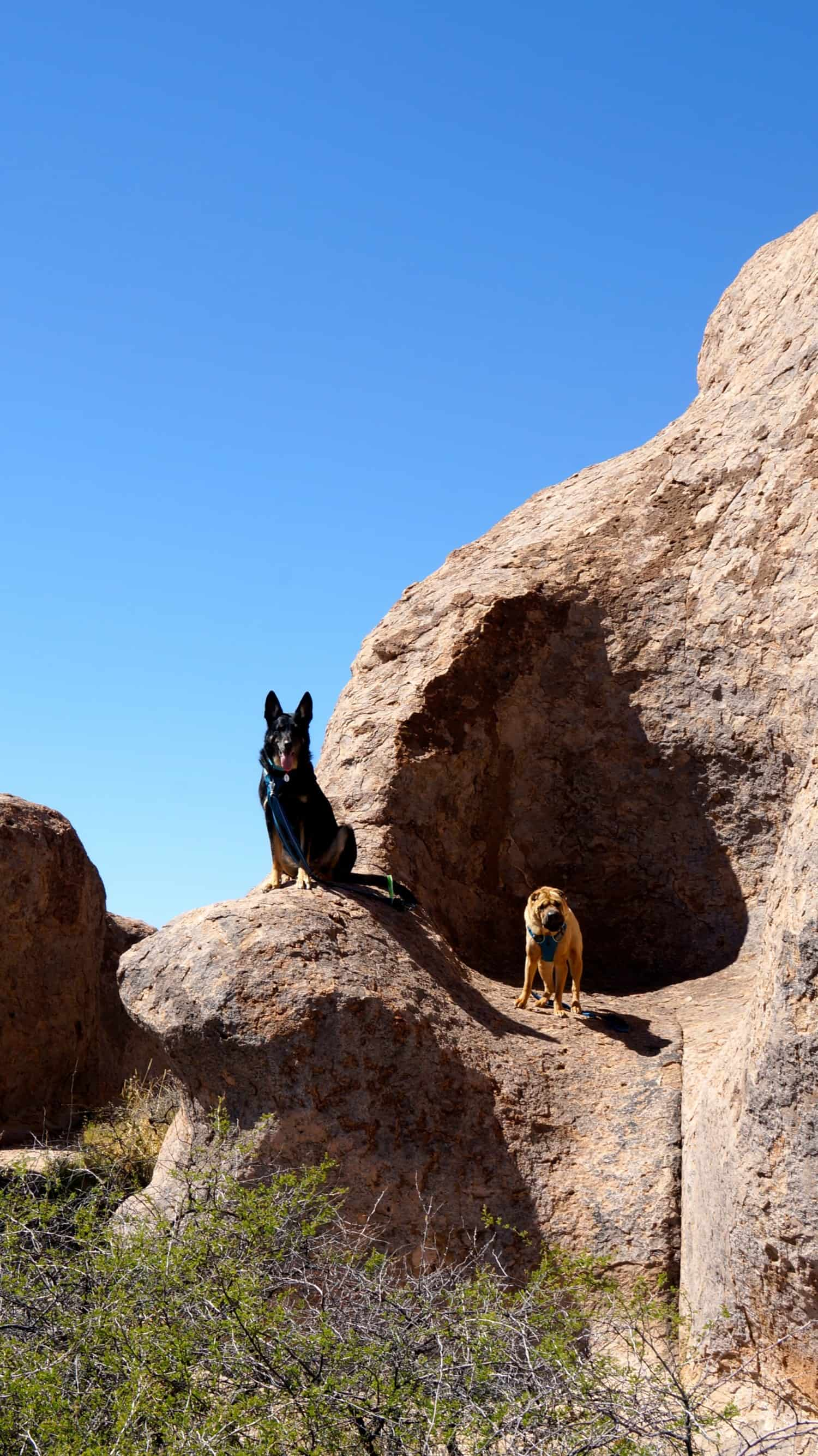 Seeing the Dog Friendly Sites in Sliver City, New Mexico