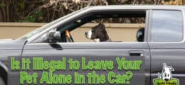 Is it Illegal to Leave Your Pet Alone in the Car?