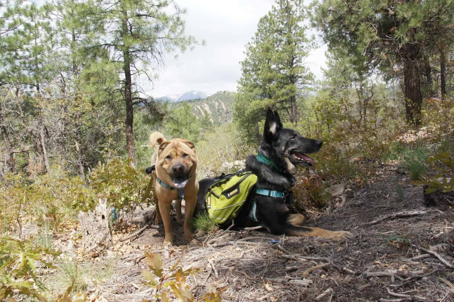 Rio Grande National Forest - Continental Divide Trail - Chama, NM