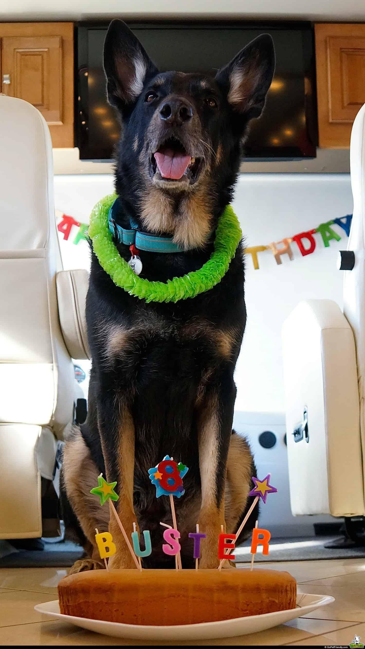 Buster's Birthday - Santa Fe, NM