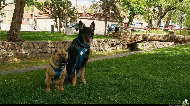 Shar-pei and German Shepherd dogs in pet friendly Santa Fe, NM