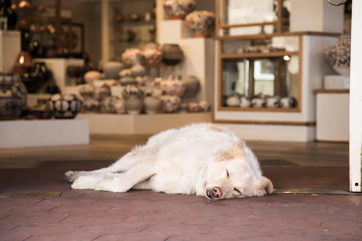 Pet Friendly Things To Do In Santa Fe