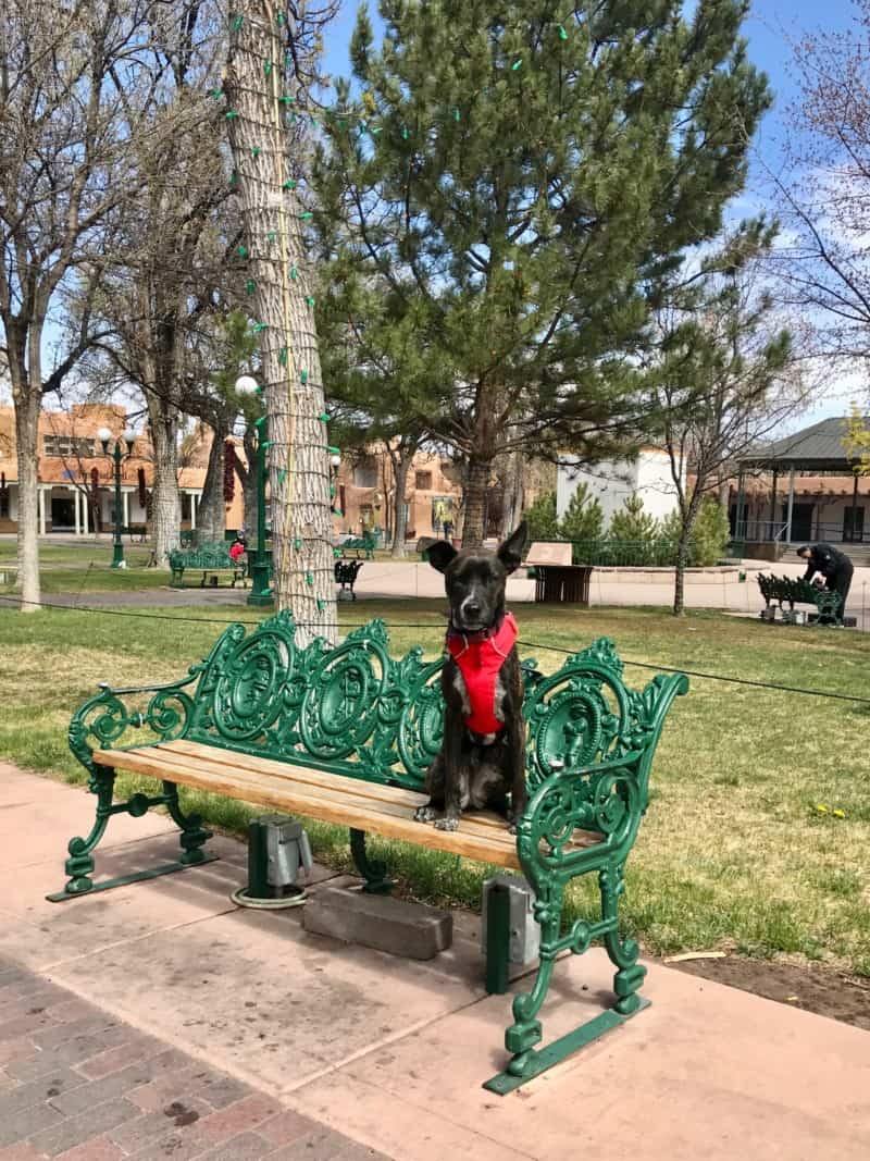Brindle dog in a red harness sitting on a bench in pet friendly Plaza Park in Santa Fe, NM