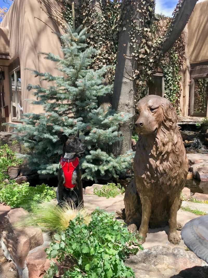 Brindle dog in a red harness posing with a statue of a dog on Canyon Road in Santa Fe, NM