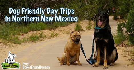 Pet Friendly Things To Do In Northern New Mexico