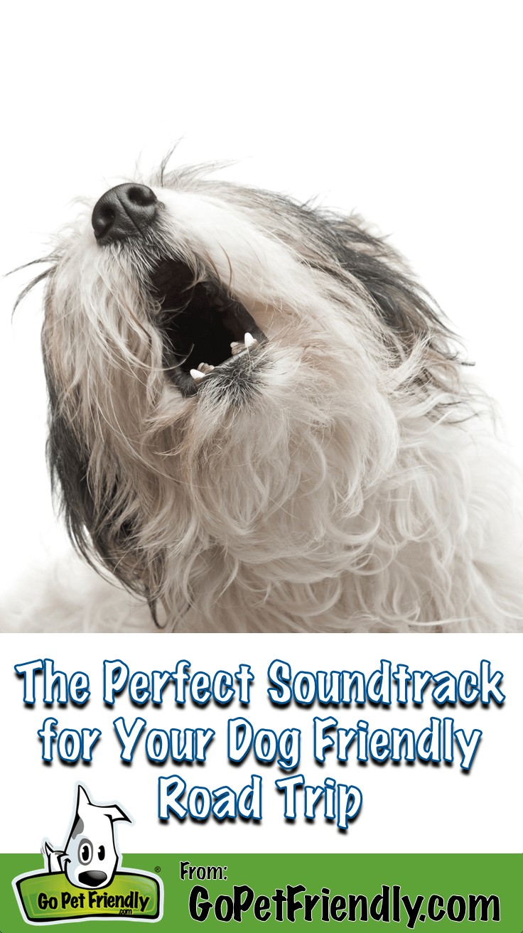 This is the perfect soundtrack for your next dog friendly road trip!