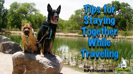 Tips to be sure your pet doesn't get lost on your next road trip.