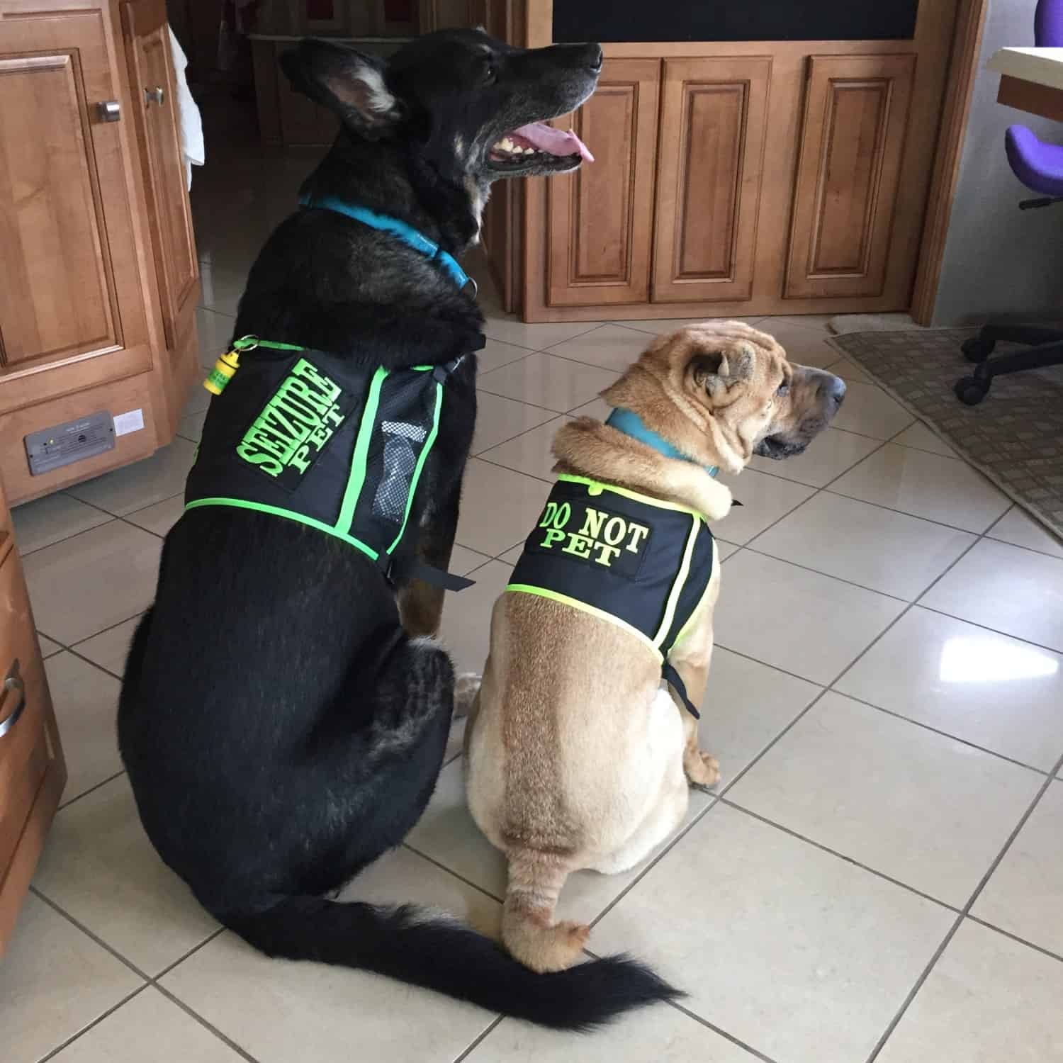 Buster and Ty in SHONGear High Visibility Vests