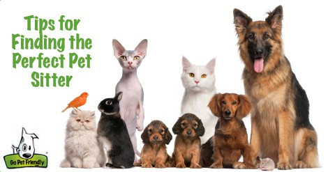 Tips for Finding the Perfect Pet Sitter from GoPetFriendly.com