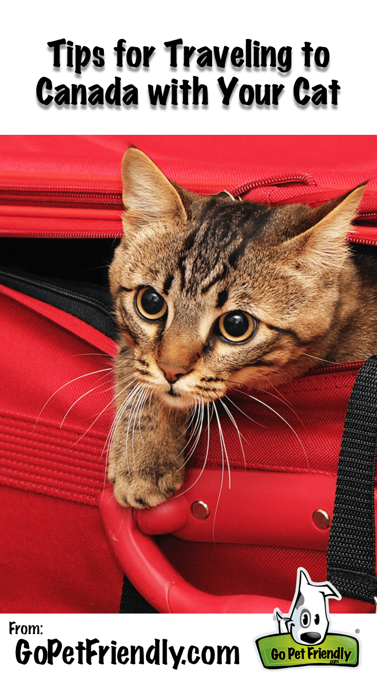Tips for Taking Your Cat to Canada from GoPetFriendly.com