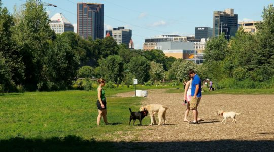 Appreciating the Mighty Mississippi with Dogs - Minneapolis, MN