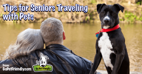 Tips for Seniors Traveling with Pets