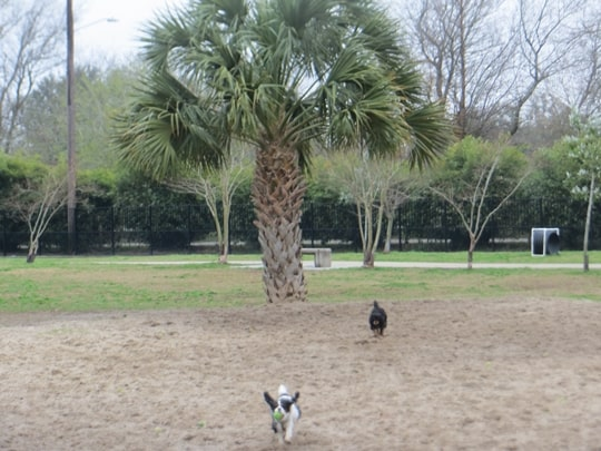 City Bark Park - New Orleans, LA