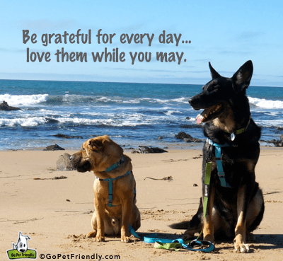 Be Grateful for Everyday