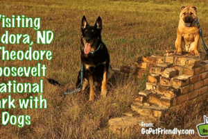 Visiting Medora, North Dakota & Theodore Roosevelt National Park with Dogs