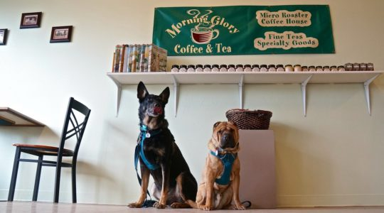 Morning Glory Coffee & Tea - West Yellowstone, MT
