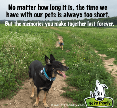 No matter how long it is, the time we have with our pets is always too short. But the memories you make together last forever.