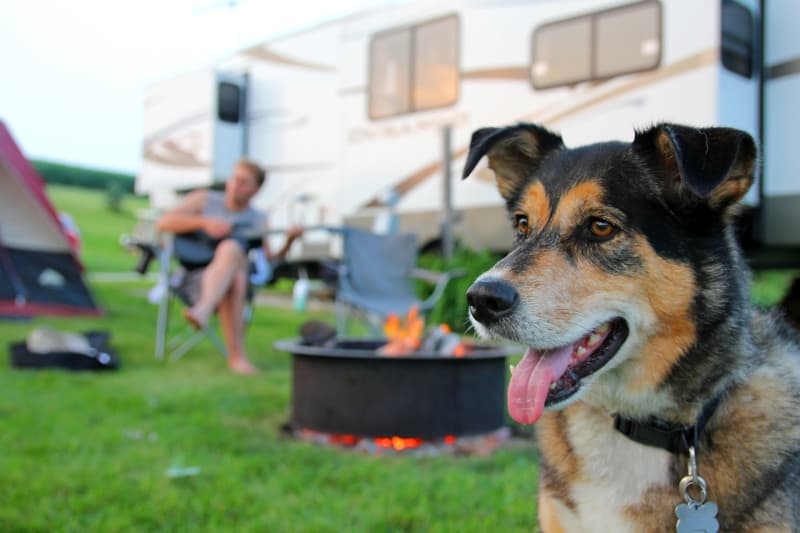 Dog at a pet friendly campground in front of man playing guitar
