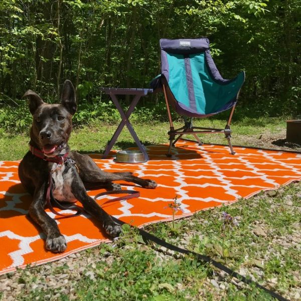 What Makes Campgrounds Truly Pet Friendly?