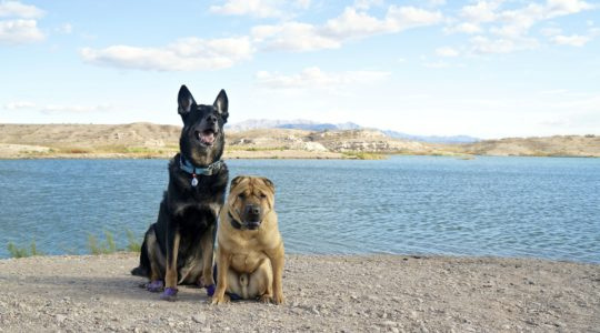 Buster and Ty at Lake Mead NRA, NV
