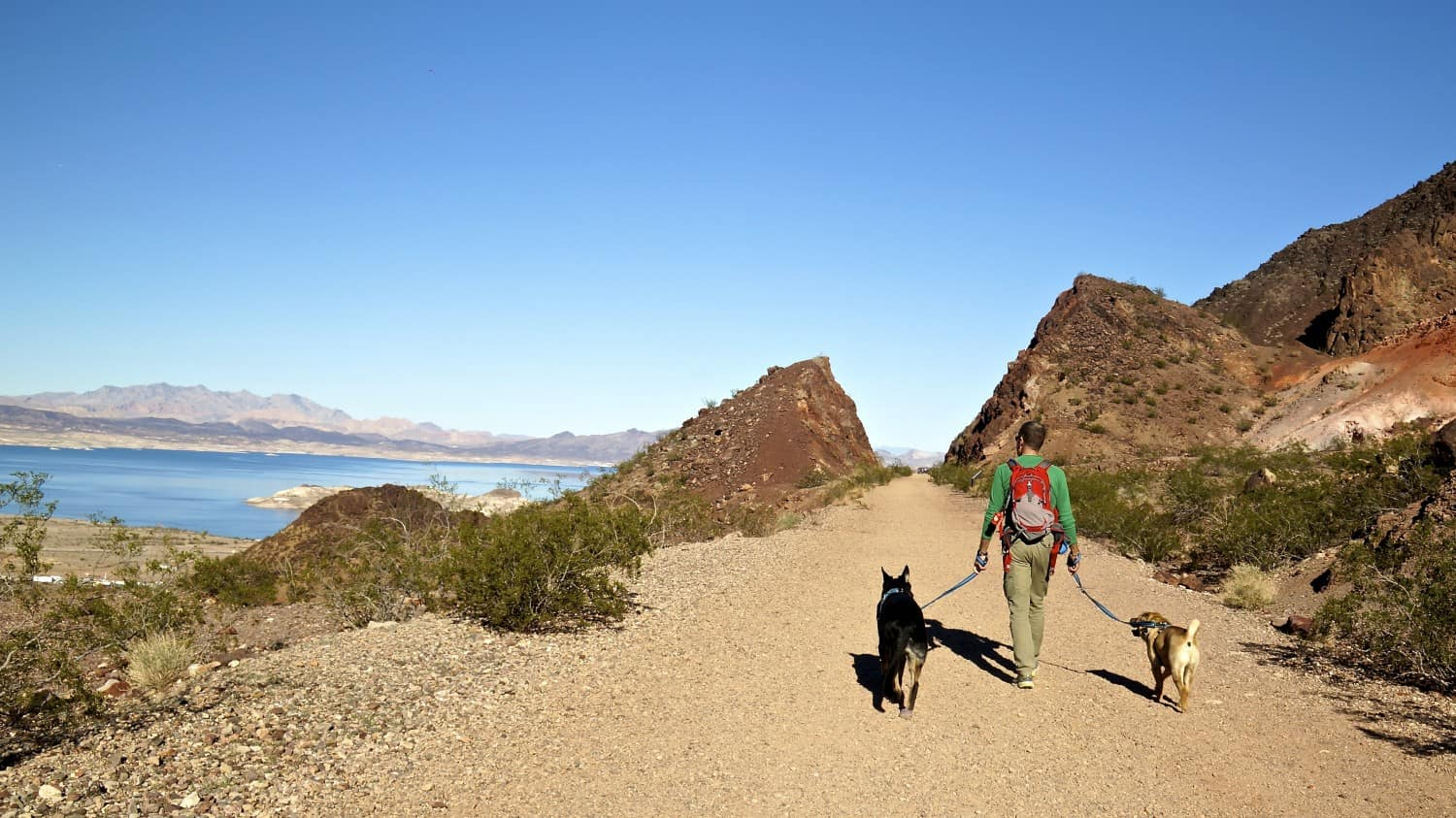 Man walking two dogs on a pet friendly trail in Lake Mead National Recreation Area