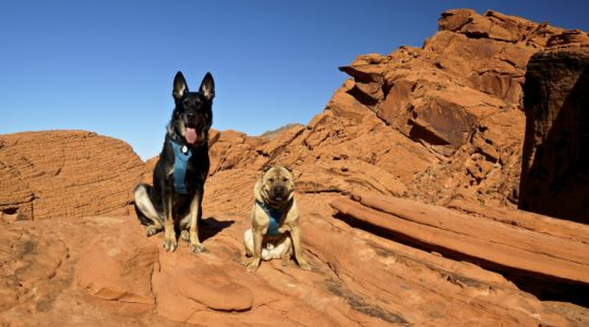 Buster and Ty at Redstone Trail - Lake Mead, NV